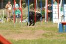Agilityturnier am 30.06.2007 _2