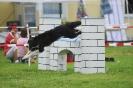 Agilityturnier und Landessiegerprüfung am 17./18.05.2008